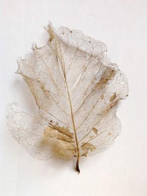 lovely leaves 03